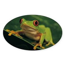 Red eye tree frog Decal