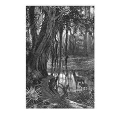 Florida Everglades, 1885 Postcards (Package of 8)