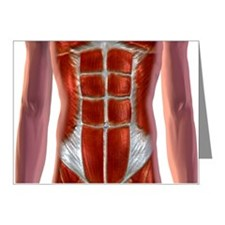 Abdominal Muscles Note Cards (Pk of 20)
