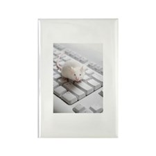 White mouse on compute Rectangle Magnet (100 pack)