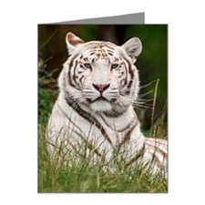 Portrait of White Tiger Note Cards (Pk of 20)