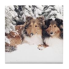 (1) Snow Shelties Tile Coaster