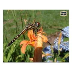 Chesapeake Arboretum 07 06 calendar 16x20 print