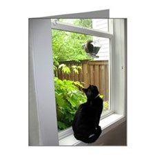 Black Cat Watching Squirrel  Note Cards (Pk of 20)