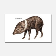 Collared Peccary Animal Car Magnet 20 x 12