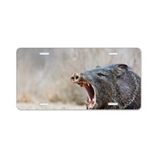 Javelina (collared peccary) Aluminum License Plate