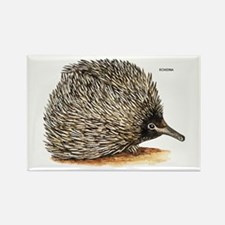 Echidna Spiny Animal Rectangle Magnet