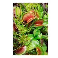 Venus fly trap plant Postcards (Package of 8)