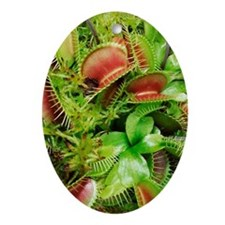 Venus fly trap plant Ornament (Oval)