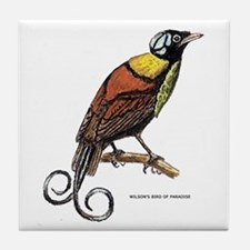 Wilson's Bird of Paradise Tile Coaster