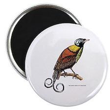 Wilson's Bird of Paradise Magnet