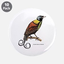 "Wilson's Bird of Paradise 3.5"" Button (10 pack)"
