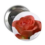 Coral Beauty Rose Button