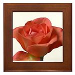 Coral Beauty Rose Framed Tile