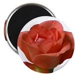 Coral Beauty Rose Magnet