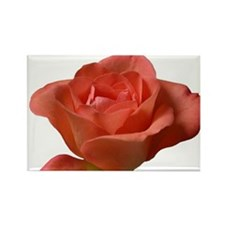 Coral Beauty Rose Rectangle Magnet