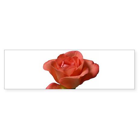 Coral Beauty Rose Bumper Sticker
