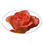 Coral Beauty Rose Oval Sticker