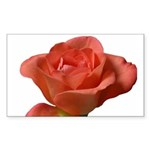 Coral Beauty Rose Rectangle Sticker