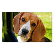 Portrait of Beagle eyes. Decal