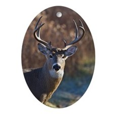 Whitetail Deer buck Ornament (Oval)