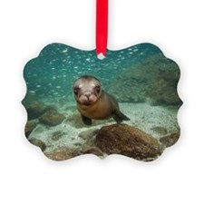 California sea lion in water with Ornament