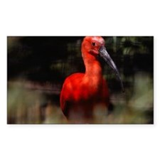 Red bird, Zoological Gardens,  Decal