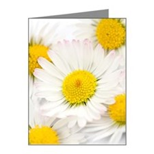 Detail of daisy blossoms Note Cards (Pk of 10)