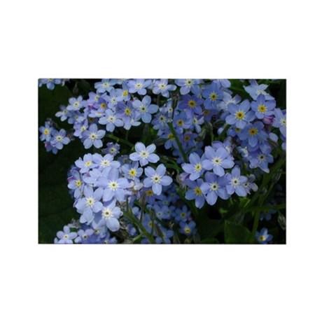 Forget Me Nots Rectangle Magnet