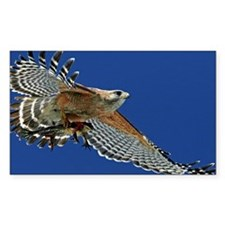 Red shouldered hawk in f Decal
