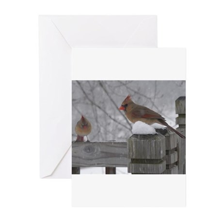 Northern Cardinal Females Greeting Cards (Pk of 10