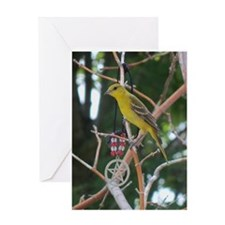 Oriole with Pentacle Greeting Card