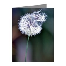 Dandelion Note Cards (Pk of 20)