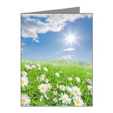 Summer daisies bathed in sun Note Cards (Pk of 20)