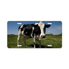 A black and white cow in a  Aluminum License Plate