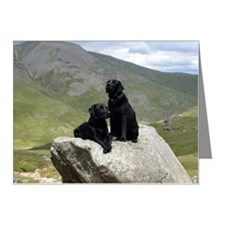 Two black Labrador dogs posi Note Cards (Pk of 10)