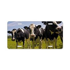 Cows Aluminum License Plate