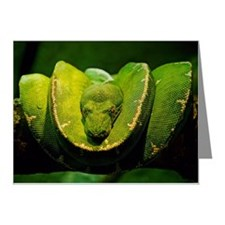 Green Snake coiled on tree f Note Cards (Pk of 20)