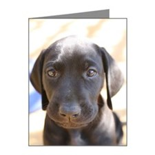 Black German Shorthair Point Note Cards (Pk of 10)