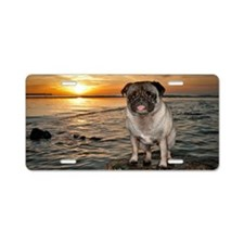 Pug dog sits on rock at low Aluminum License Plate