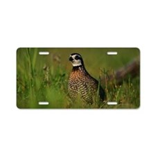 Male Bobwhite Quail Aluminum License Plate