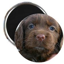 Puppy Dog Magnet