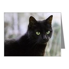 Close up of black cat Note Cards (Pk of 10)