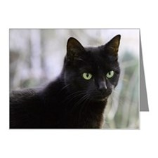 Close up of black cat Note Cards (Pk of 20)