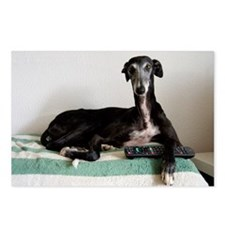 Black greyhound waching t Postcards (Package of 8)