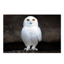 Snowy owl Postcards (Package of 8)