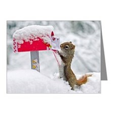 Squirrel searches for Valent Note Cards (Pk of 10)