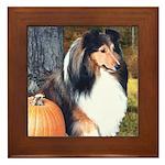 Autumn Sheltie Framed Tile