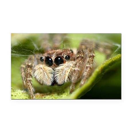 Jumping spider showing their Rectangle Car Magnet