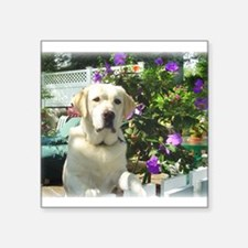 Bogart's Yellow Lab Rectangle Sticker